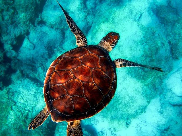 Dan živali in rastlin divjine: Življenje v vodi za ljudi in planet