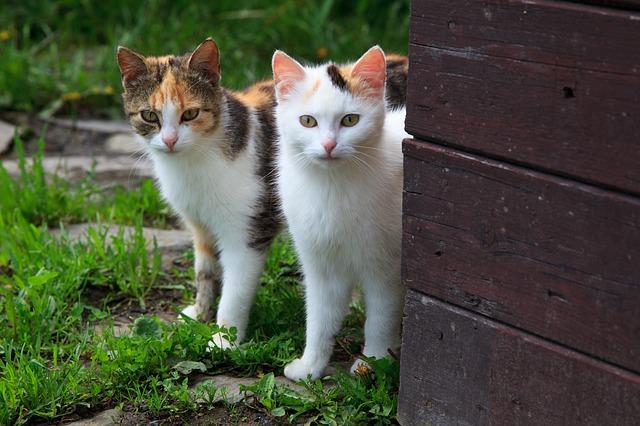 Daj tačko! Steriliziraj svojo mačko - Nižje cene kastracij in sterilizacij po slovenskih občinah