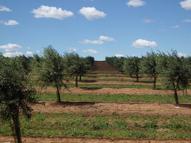 olive-trees-1234561_640