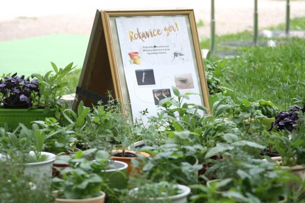 Rokavice gor: za odsluženo posodo prejmete sadike, ki odganjajo tigraste komarje