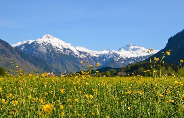 Na kvadratnem metru slovenskega travnika je 80 različnih rastlinskih in živalskih vrst