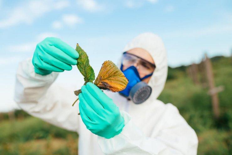 Vemo, kaj je glifosat in kako vpliva na naše zdravje in okolje?