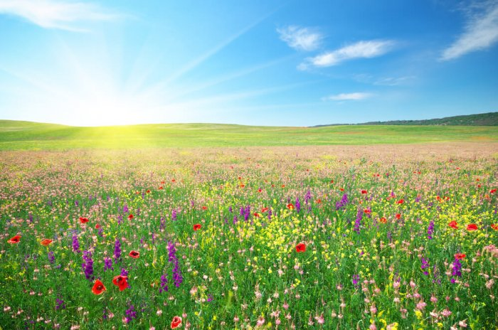 FOTO: Cvetoči travniki in polja