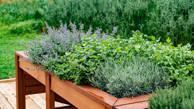 Obiščite vrt zdravilnih in aromatičnih rastlin