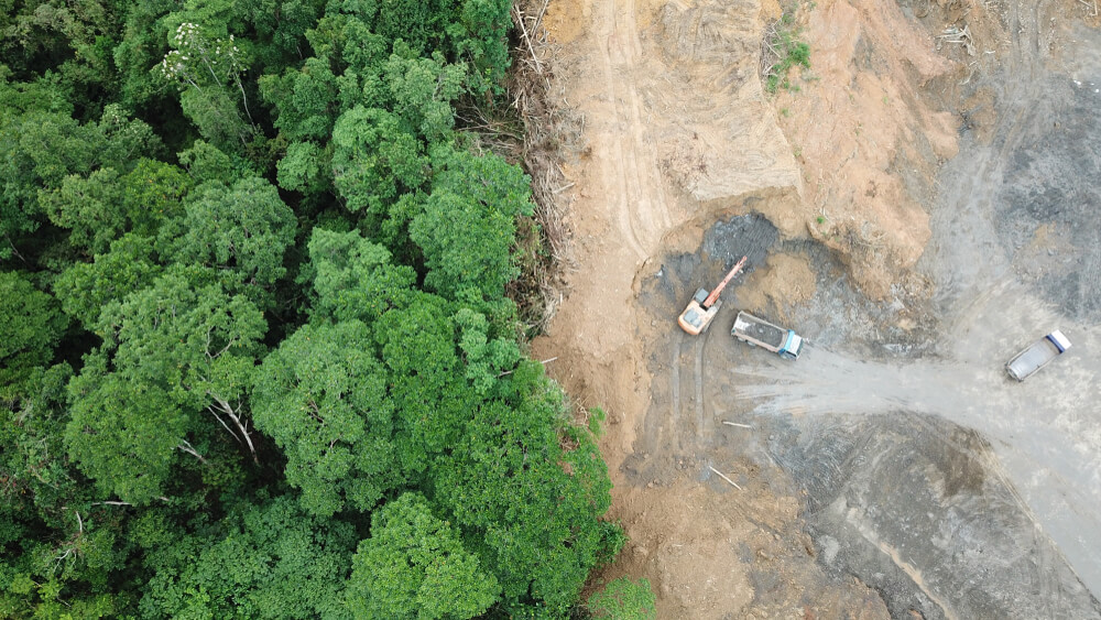 Evropska komisija predlaga ukrepe za zaščito in obnovo svetovnih gozdov