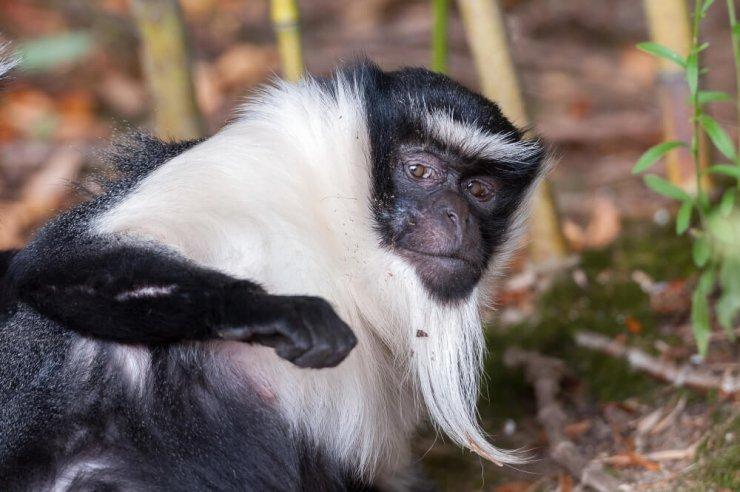 Žalostni trend se nadaljuje: novim 7.000 živalskih vrstam grozi izumrtje