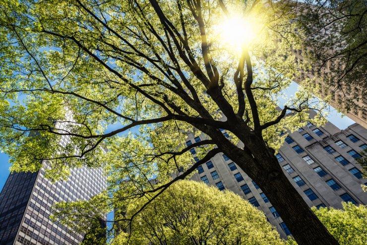 Mesta bi morala drevesa prepoznati kot ukrep za zdravje