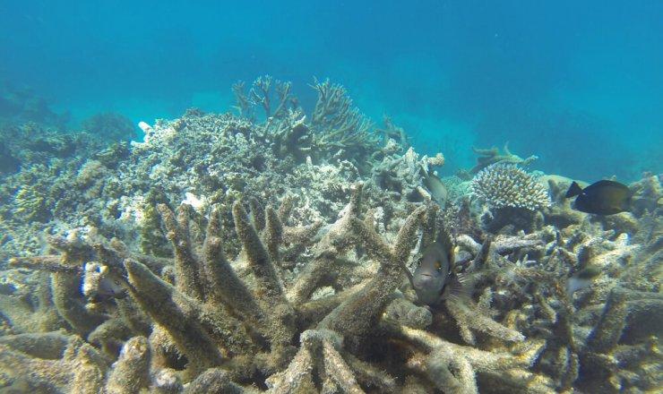 Koralni greben bo dobil svoj podvodni muzej z okoljsko noto