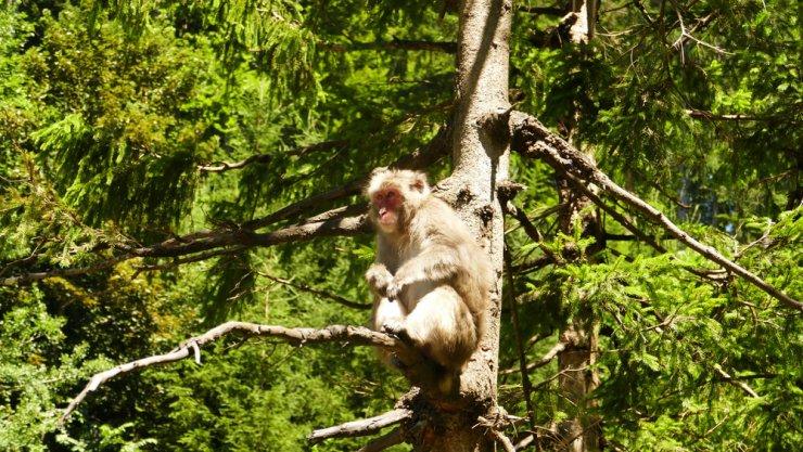 Ideja za izlet: Opičja gora v Beljaku