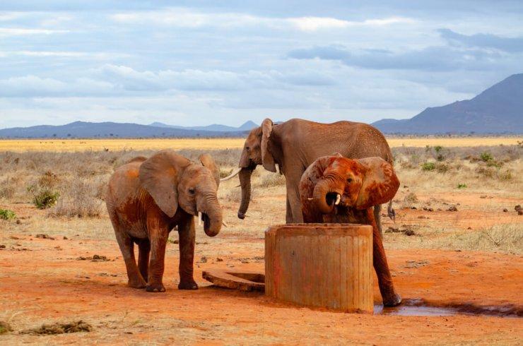 Vsak dan se vozi več ur, da živalim zagotovi vodo v suši