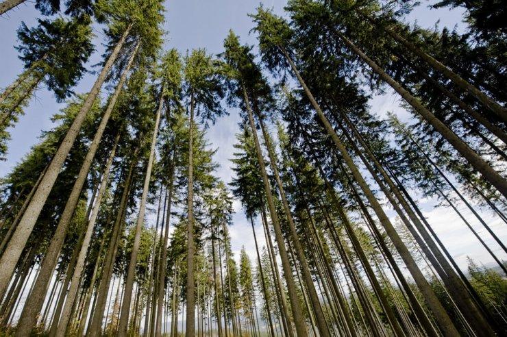 Kaj morate vedeti o drevesih in njihovi vlogi pri podnebnih spremembah?