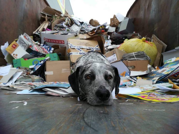 Društvo za zaščito živali Kranj že 17. organizira akcijo zbiranja starega papirja