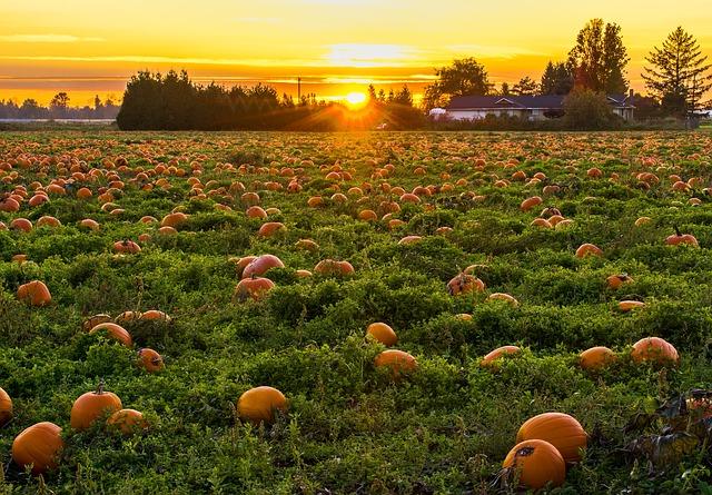 FOTO: Jesen po Evropi