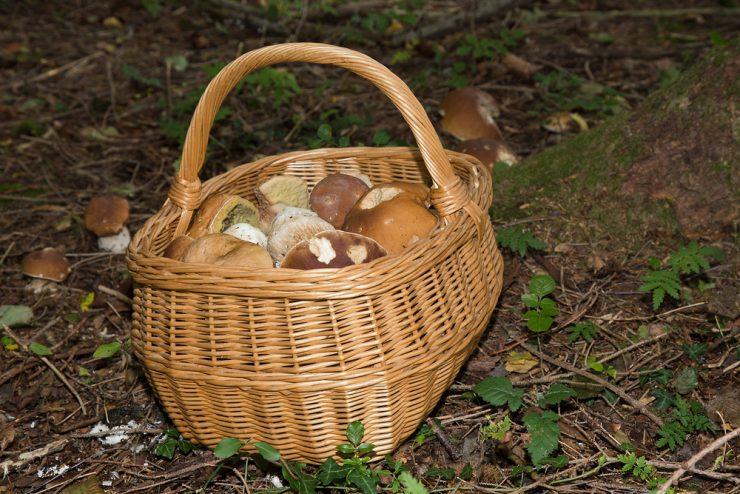 V gozd po gobe: odgovorno do sebe, drugih in narave!