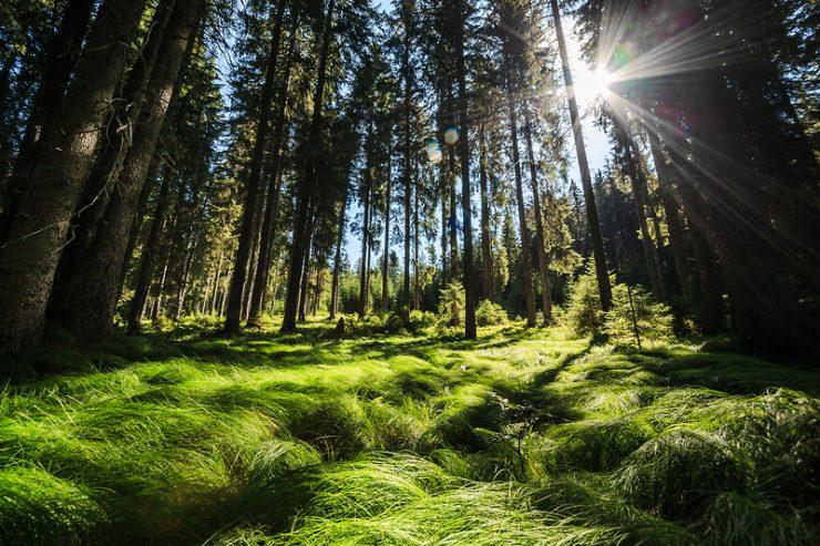 Evropski teden gozdov 2019: gozdovi so ključ do blaženja podnebnih sprememb