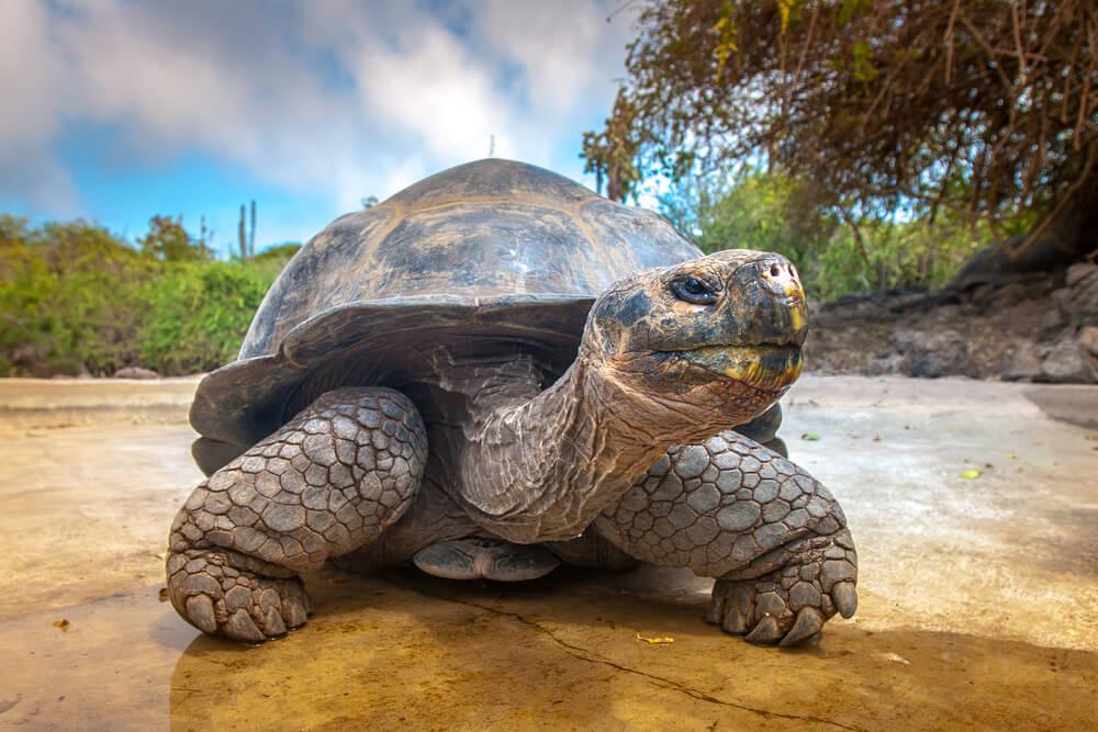 Slavni želvak Diego opravil svojo nalogo in odhaja domov
