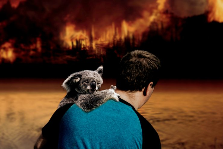 Avstralija: kako lahko pomagate koalam in drugim živalim, prizadetim v požarih?