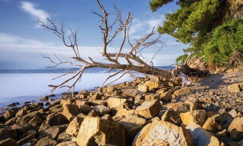 Krajinski park Debeli rtič vabi na ogled