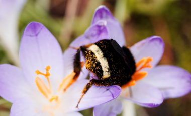 Divji opraševalci: pomagajmo čmrljem in divjim čebelam z izdelavo gnezdilnice