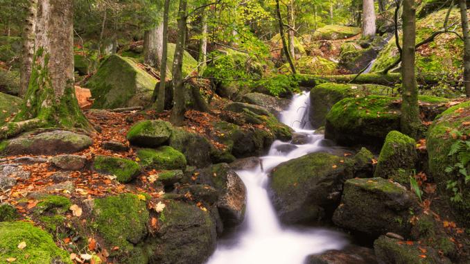 najlepši gozd na svetu