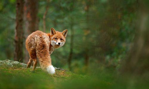 Nemške stare vojaške baze bodo od zdaj naravni rezervati za živali