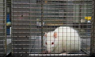 Zakaj bi morali takoj prenehati s poskusi na živalih?