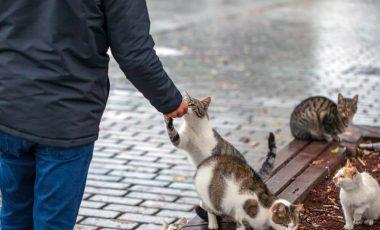 Vsak dan zbira odpadne kovine, da nahrani potepuške mačke