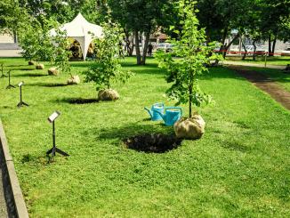 V mestne parke sadijo sadna drevesa in zelišča