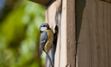 Kako naredimo gnezdilnico za ptice?