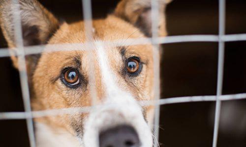 Živali v Sloveniji odslej (končno) priznane kot čuteča bitja