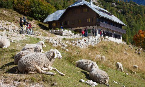 Gorske koče pred novo planinsko sezono ponujajo priložnost za delo
