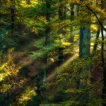 Gozdovi in biotska raznovrstnost – predragoceni, da bi jih izgubili