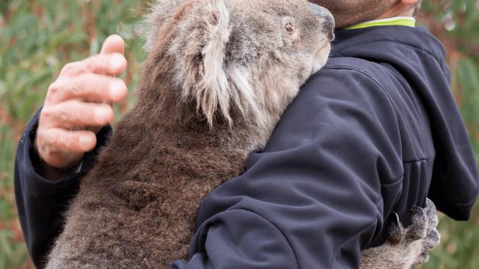 Avstralija po požarih: 113 avtohtonih vrst vse bližje izumrtju