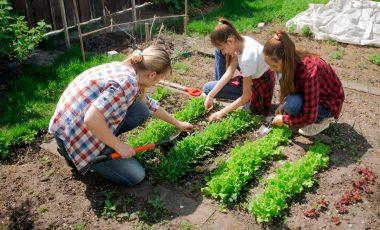 Vrt za samooskrbo