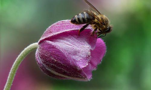 Jutri bomo praznovali že tretji Svetovni dan čebel!