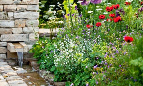 Imate biodiverziteti najbolj prijazen vrt?