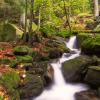 Najlepši gozd na svetu - za sprehod in fotke
